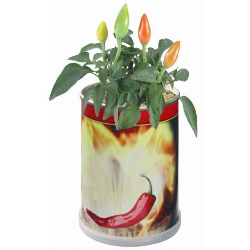 Blumendose Hot