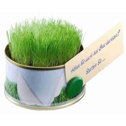 Mini Garten Gras mit Magnet