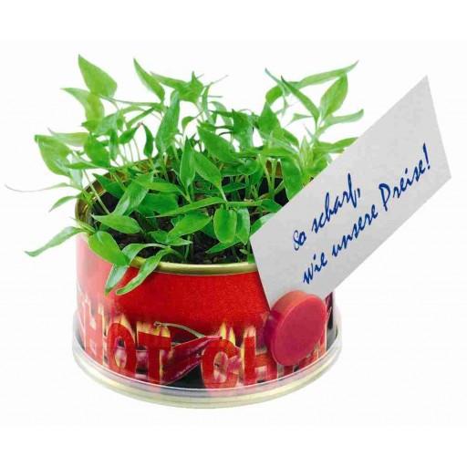 Mini Garten Chili ohne Magnet