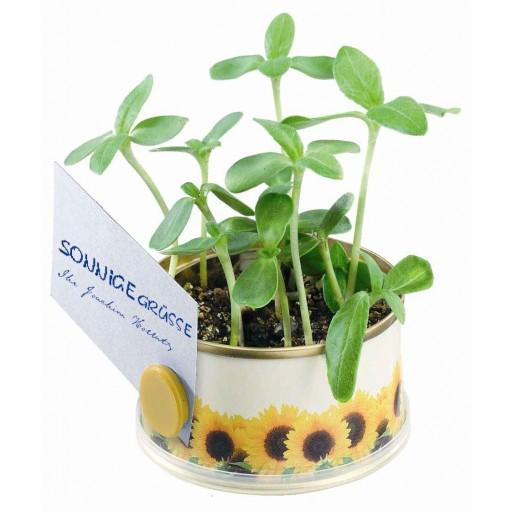 Mini Garten Sonne ohne Magnet