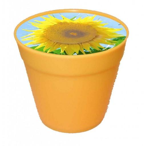 Business-Töpfchen gelb, Zwergsonnenblume