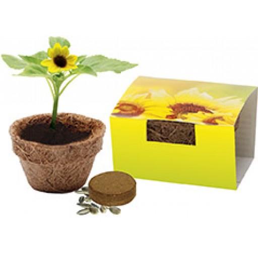 Kokos-Topf klein, Bio-Sonnenblume