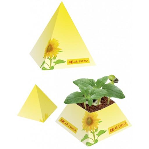 Wachstums-Pyramide, Zwergsonnenblume
