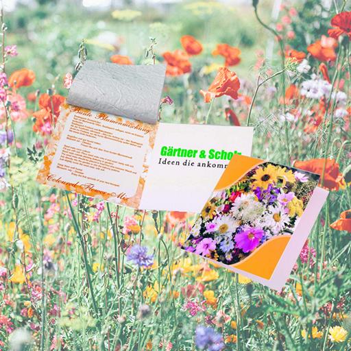 Saatteppich Klappkärtchen, Blumenmischung
