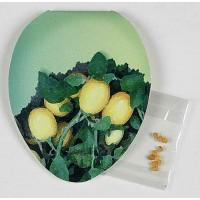 Samen-Klappkärtchen Ei-Form, Eierbaumsamen