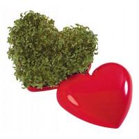 Ein gesundes (Kresse-)Herz
