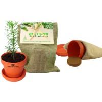 Natursäckchen  'Pflanze deinen Baum'