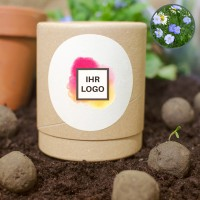 10 Seedbombs in Stülp-Logodose | Himmelsblau