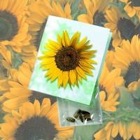 Samen-Klappkärtchen Sonne