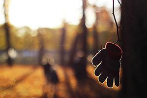 Handschuh hängt am Zweig