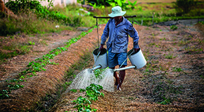 Arbeiter auf der Fairtrade Plantage
