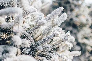 Tannenbaum mit Schnee
